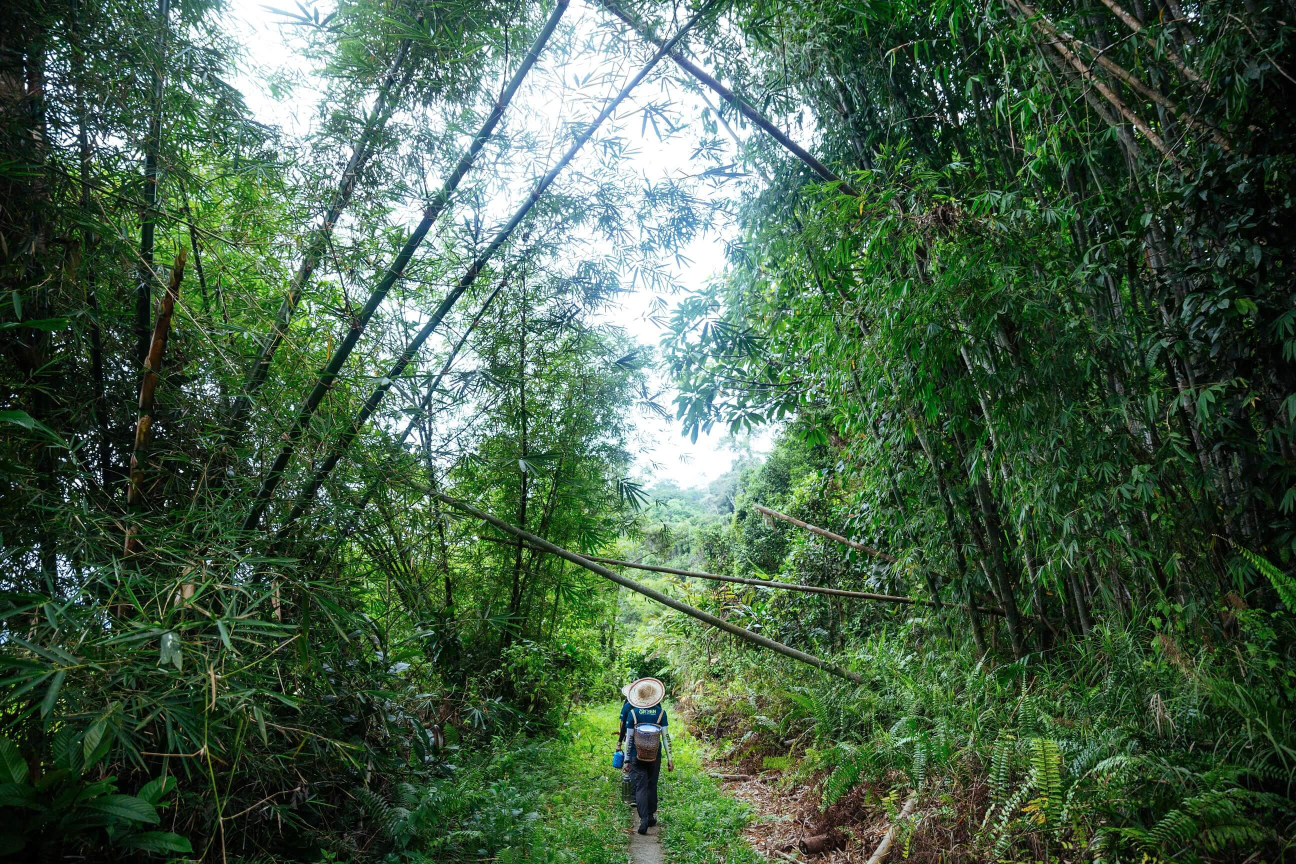 Zi leads guests on a walk through the bamboo forest.