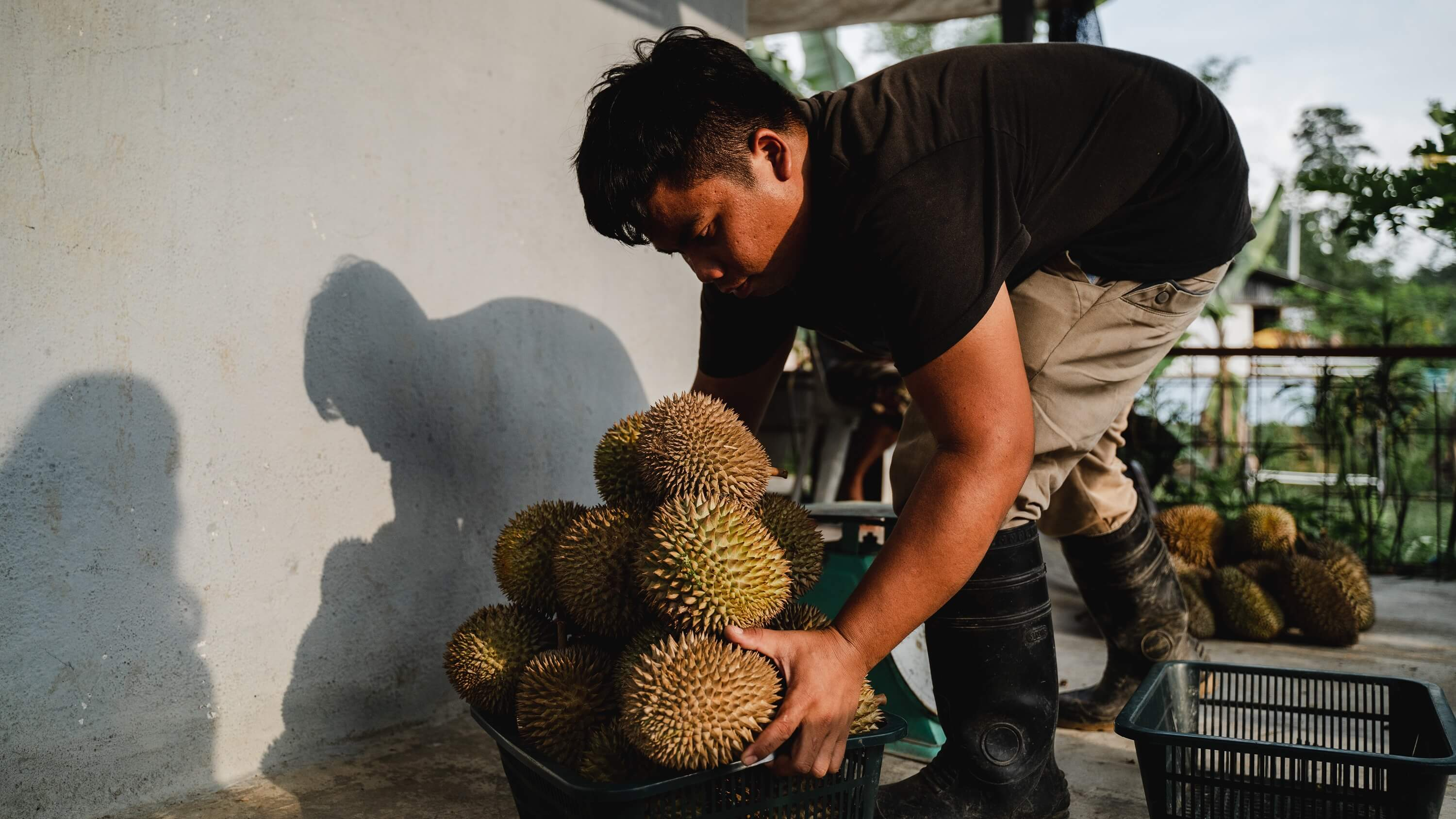 Yee Kuat [pictured] has been buying and trading Temuan-grown durians since he was 15 years old. Photo courtesy of Native