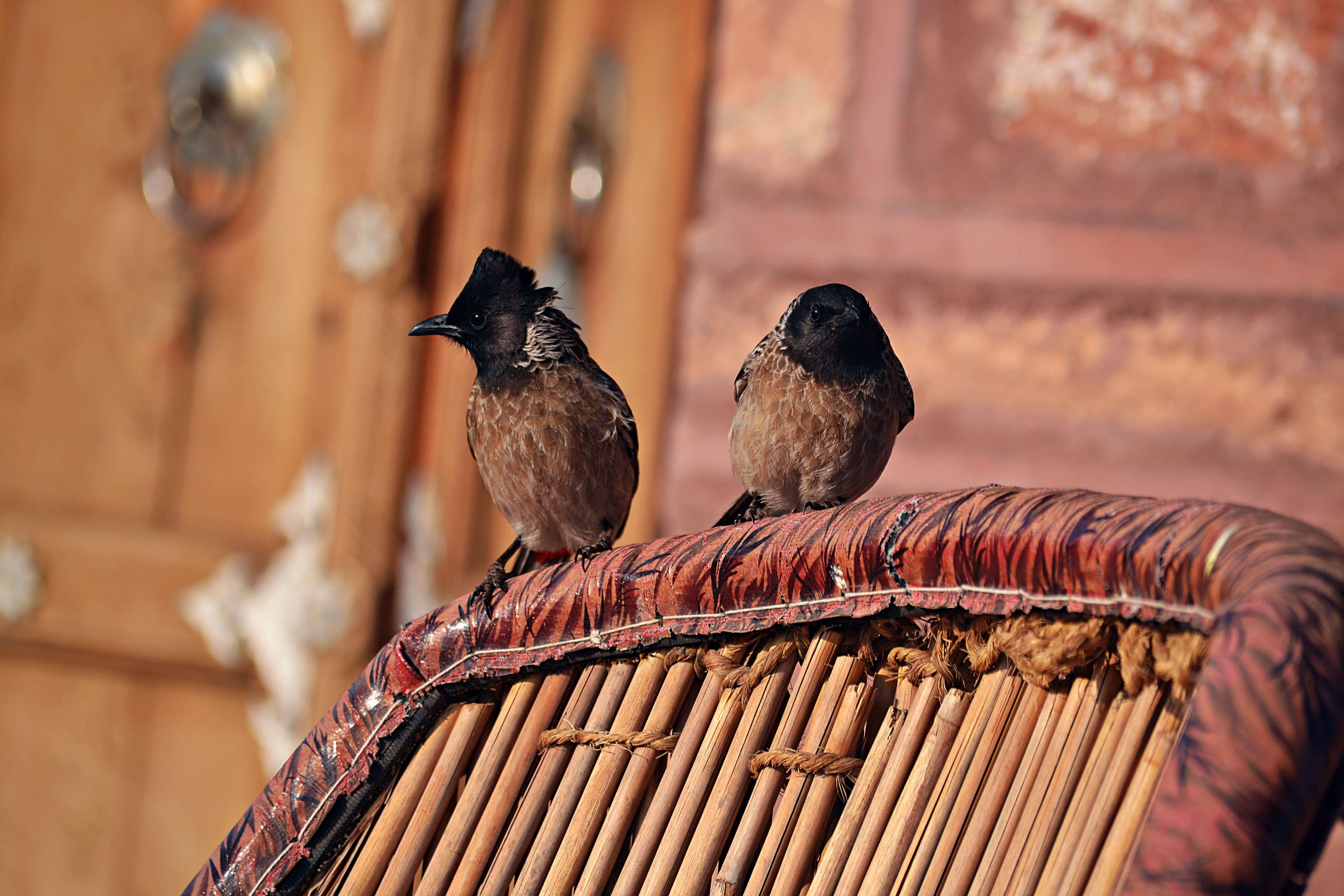 Birds sitting on a chair, on the Hacra Dhani property